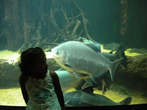 Nivedhana meets the Big Fish in the Aquarium